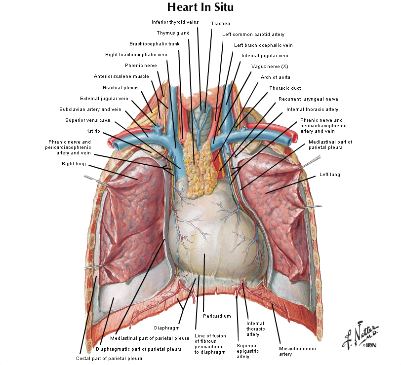 Is There An Antomical Continuity Between Pleural Space And
