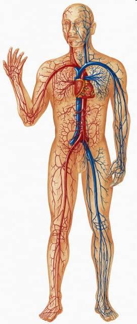 micro circulation shock