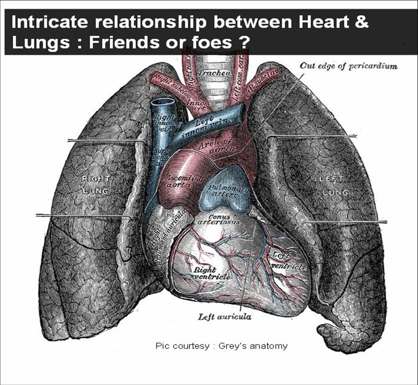 heart lungs pulmonary function test dyspnea cardiomegaly ct ratio ...