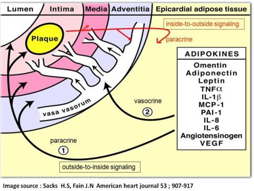 epicardial fat a dynamic depot athreosclerosis