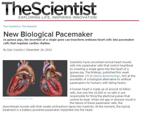 biological pacemaker