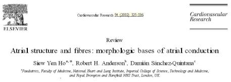 Atrial anatomy and inter nodal pathway thorel bachman wenkeback