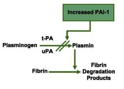 PAI plasminogen activator inhibitor